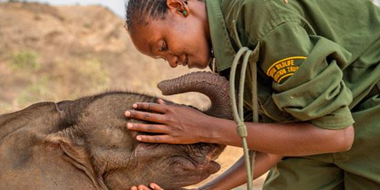 The Samburu women elephant keeper