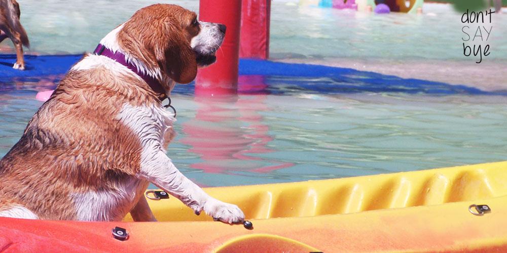 Dog Water Park in Barcelona